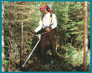 Santé et sécurité du travail en forêt, travaux sylvicoles, débroussaillage